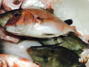 konahouse 佐渡の魚